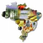 Curso de Guia de Turismo Regional I