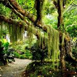 Aula: Introdução à Botânica