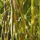 Curso Monitoramento e Controle de Pragas da Cana-De-Açúcar