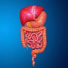 Aula: Sistema Digestório