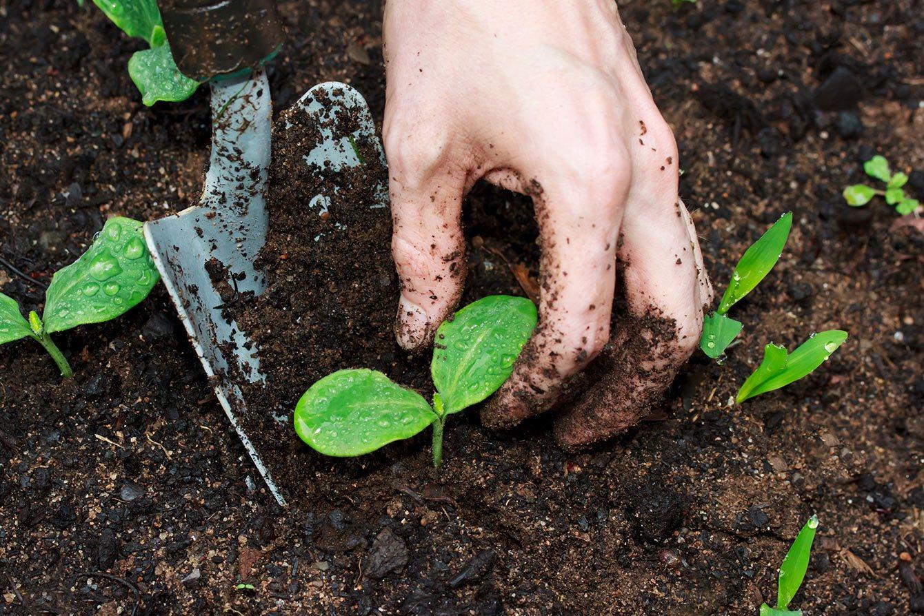 a-agricultura-precisa-de-sustentabilidade-faca-um-curso-de-agroecologia-com-certificado.jpg